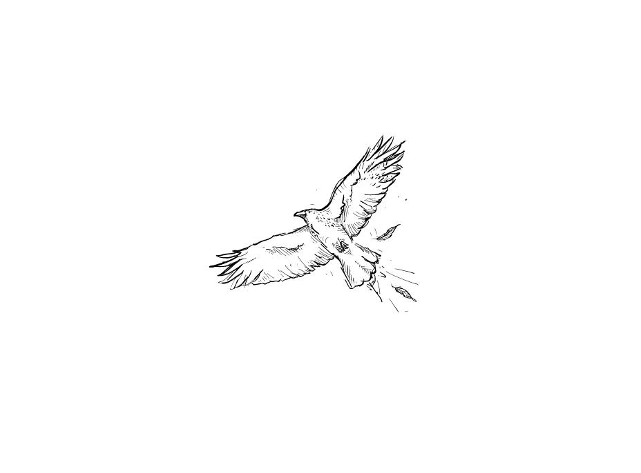 bird_n_